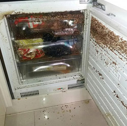 tenants left fridge infested with maggots